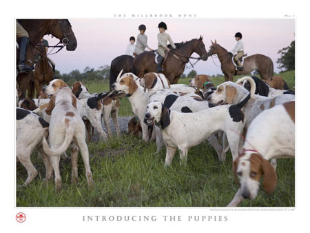 introducing_the_puppies.jpg